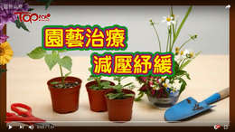 Horticultural Therapy (Video)